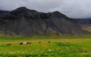 Islandshästar på Snaefellsnes