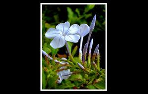 En fin blomma på en buske