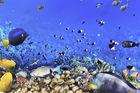 Snorklingsparadiset Hurghada