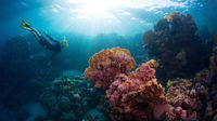 6 magiska undervattensvärldar