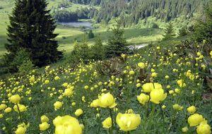 Kupres badar i vackra blommor....