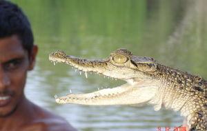 Lille krokodille