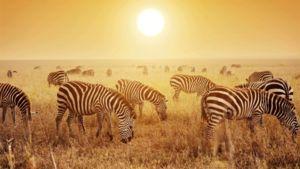 Allt du behöver veta för att få den ultimata safariupplevelsen