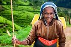 Sri Lankas höjdpunkter i 10 dagar