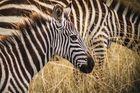 Safari i Afrika trygghet & kunskap sedan 1986