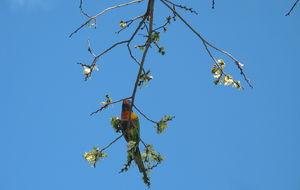 Färgglad papegoja..