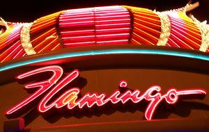 Neon-Flamingo