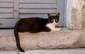 Katt i gamla stan