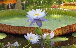 Parken Royal Flora