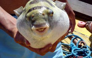 Flodfiske