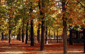 Jardin de Luxenbourg