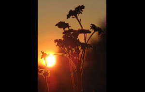 I solnedgångens sken