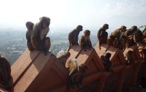Kathmandau