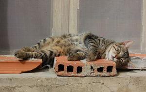 Katt på tegel