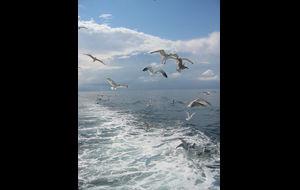 Fisketur på havet