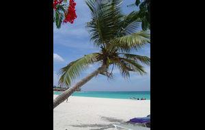 Paradis i solen!