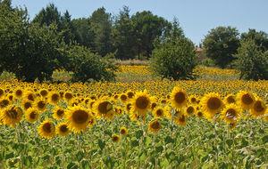 Solrosor, Provence