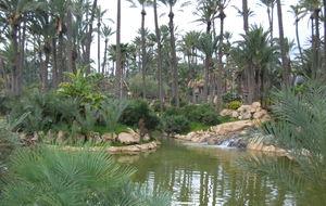 Park med palmer och ljuv musik