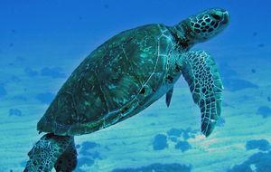 Sköldpaddor i mängder!