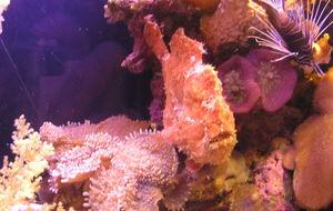 Inside Coral World