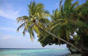 Palm på Vilamendhoos norra sida