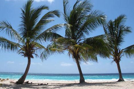 Bäst på Barbados