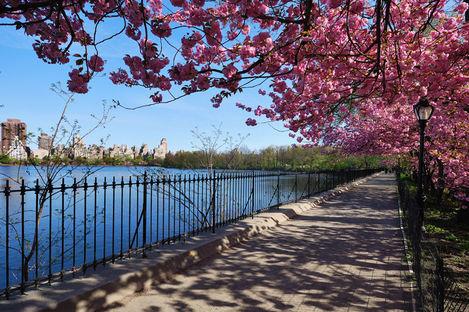Möt våren i New York