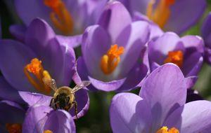 Till Sierra - visst är det vår och pollinationstid