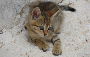 Pigadia Karpathos