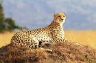Safari i Kenya & badsemester i Zanzibar
