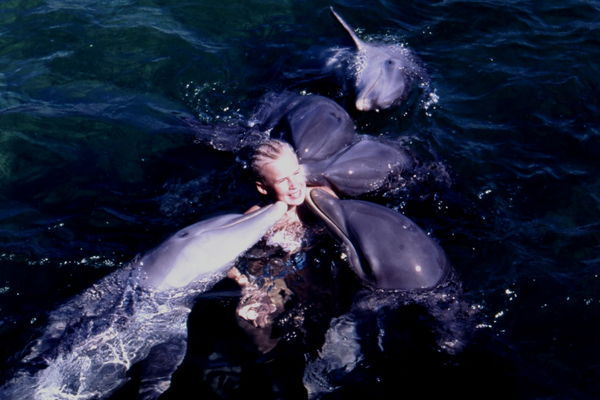 Pussglada delfiner - Varadero - Kuba