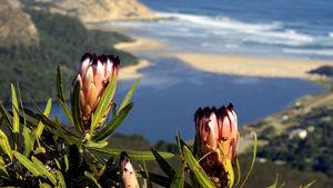 Garden Route, Western och Eastern Cape på två veckor