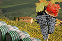 Erbjudanden och resor inom Mat & Vin