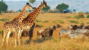 Så här ser ett dygn ut på safarilodge i Afrika