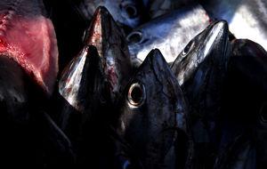 Från Fiskmarknaden