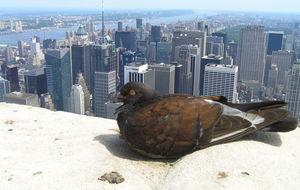 Högst upp på Empire State Building