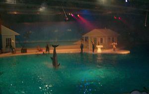 kolmårdens djurpark, Delfinshow i Delfinarium.  Marine World är ett spännande temaområde som är inspirerat av sol och varma hav. Här ser du en helt ny delfinföreställning med regi och musik av ingen mindre än Markoolio.