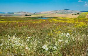 Blomstrande böljande kullar i trakten av Corleone