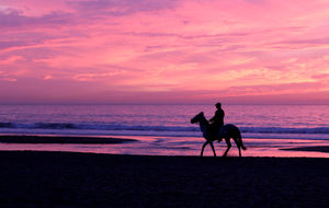Häst i solnedgång
