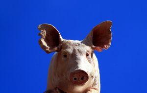 Lille grisen