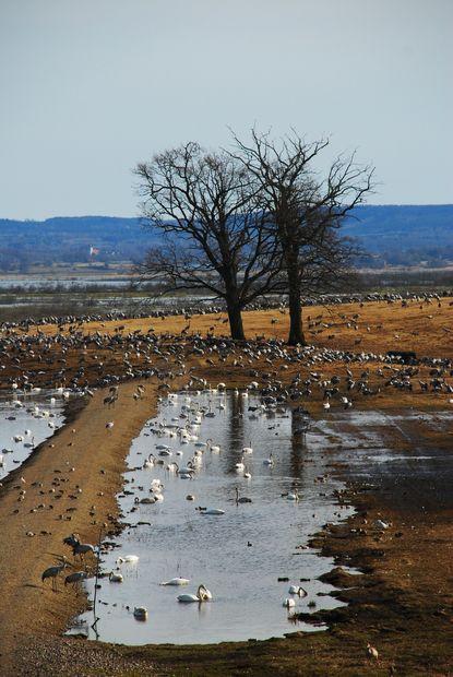 Massa olika fågelarter - Bilder Sverige