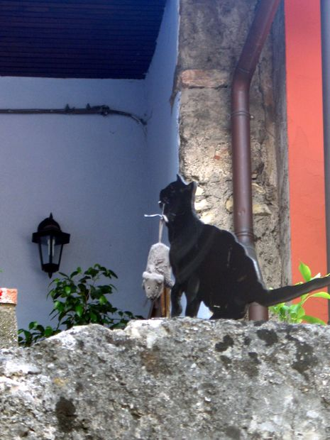 S T Katt Dekoration Bilder Malcesine Italien