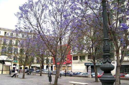 Málaga, Andalusien, Spanien