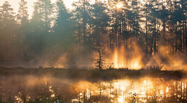 Den svenska naturen är inte att underskatta!