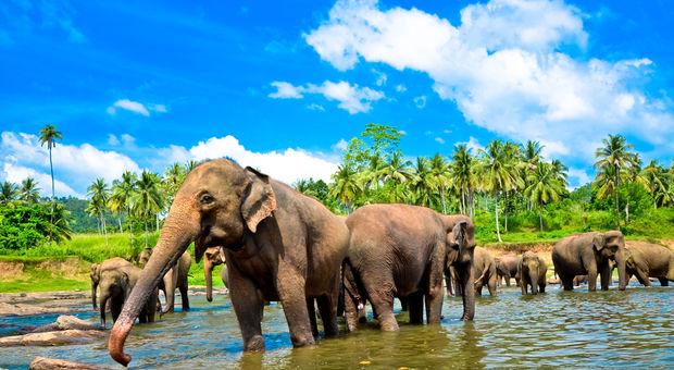 Sri Lanka, natur och elefanter.