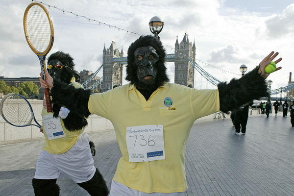 Bild: Great Gorillas