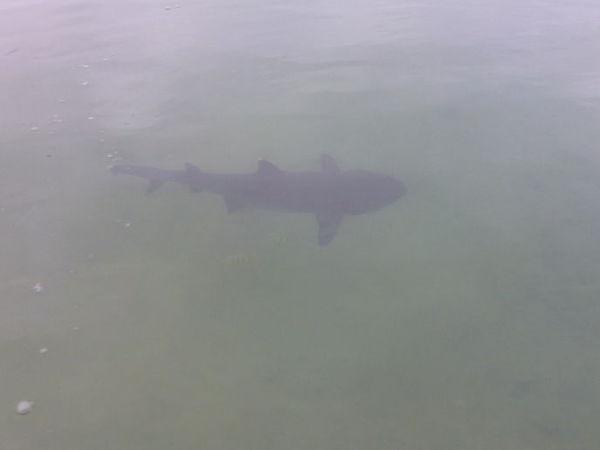 Tavlingen brots nar haj hoppade in