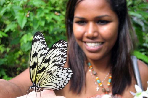Singapore; Sentosa Butterfly Park