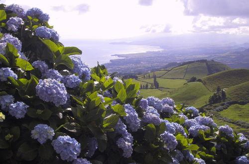 Hortensian prydde landskapet