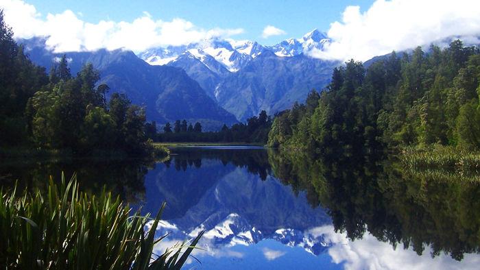 Nya Zeeland Twitter: 5 Måsten På Nya Zeeland